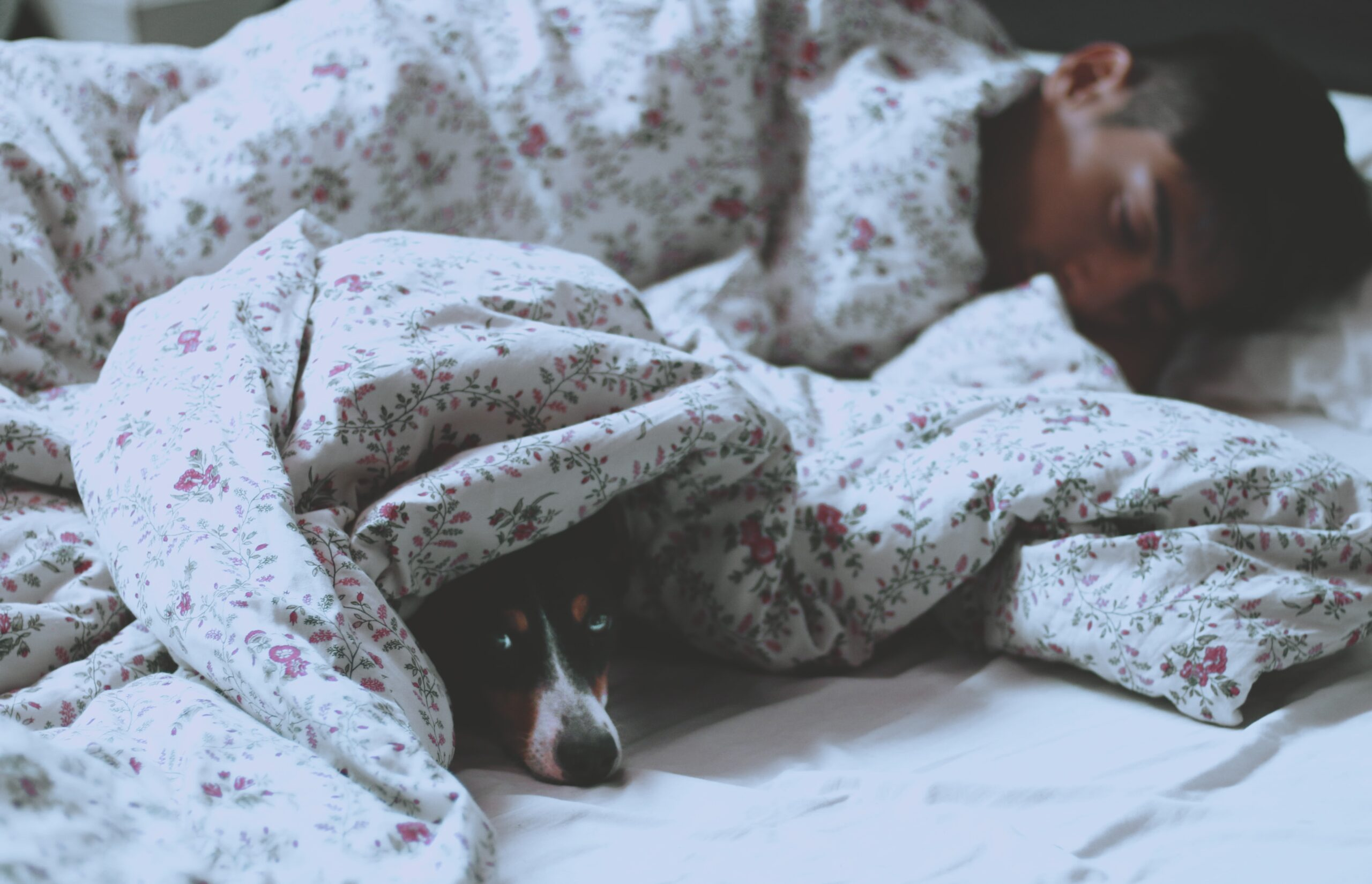 Dog Sleeping in Bed with scented pillows and sheets